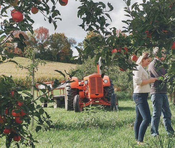 Ontario apple farm
