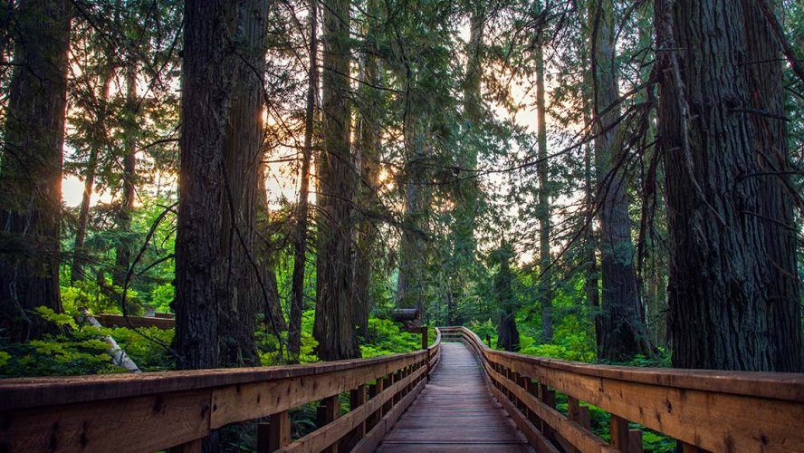 Walkway through a forest in Prince George
