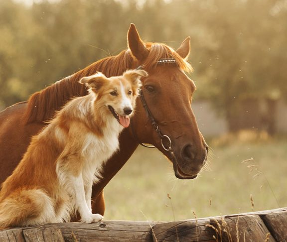 Horse and a dog on a farm
