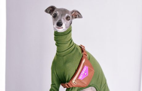 Tika the Iggy, an Italian greyhound in a velvety green onesie