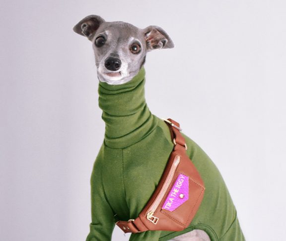 Tika the Iggy, an Italian greyhound in a velvety green onesie