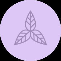 Schmidt's infographic icon leaf