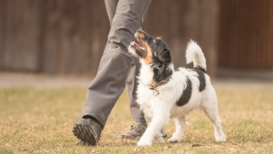 Person walking along side a dog