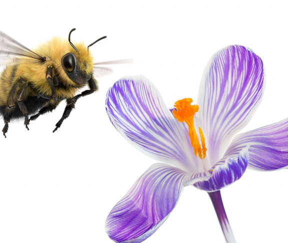 Bumblebee-and-flower telus impact investing