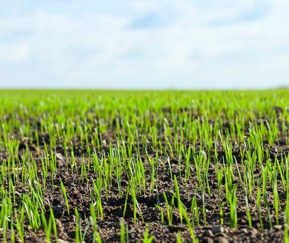 Integrowana Produkcja Roślin równa się bezpieczeństwo żywności?