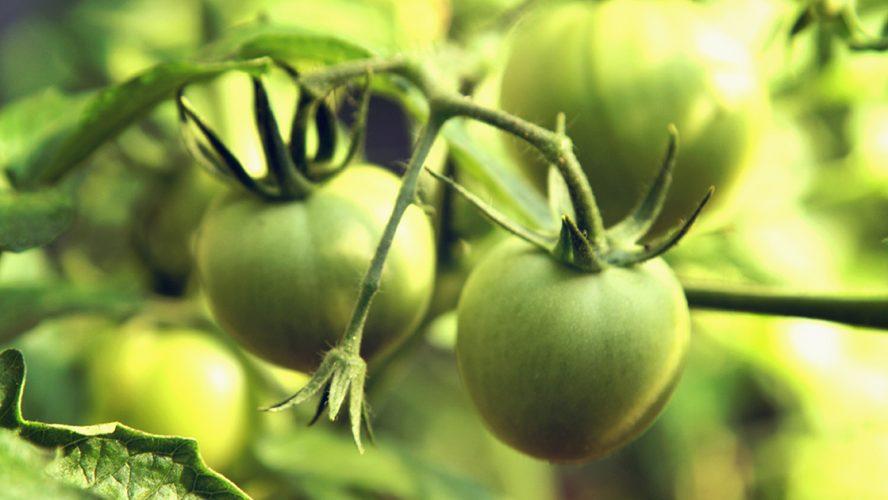 Jak-bezpiecznie-stosować-środki-ochrony-roślin
