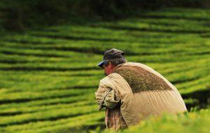 Możliwości finansowania działalności rolniczej