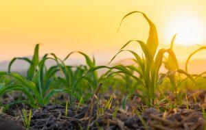 Monitoruj-uprawy-rolnicze-i-chroń-rośliny