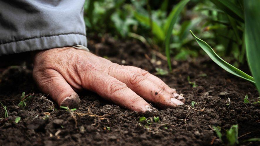 Alert dla żyzności gleb uprawnych w Polsce
