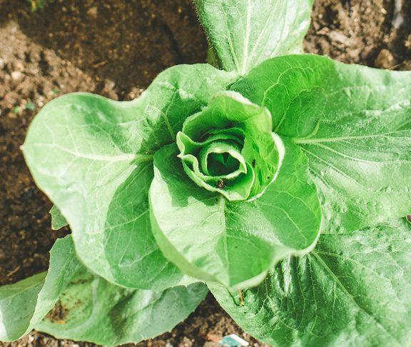 Potrzeba korzystania ze środków ochrony roślin