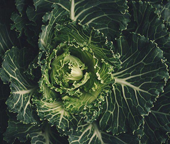 Produkcja-żywności-ekologicznej