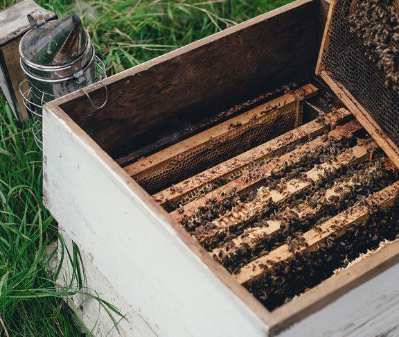 Pszczoły warte miliardy