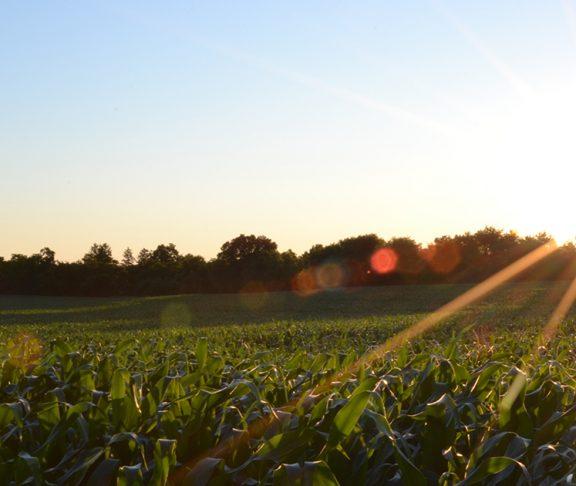 Rolnik z prądem, czyli OZE we współczesnym gospodarstwie