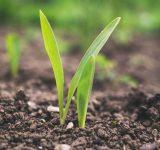 Wykorzystanie węgla brunatnego w rolnictwie