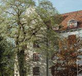 Bygning bak trær