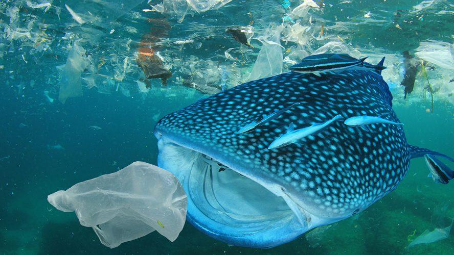 Fisk som svelger plast