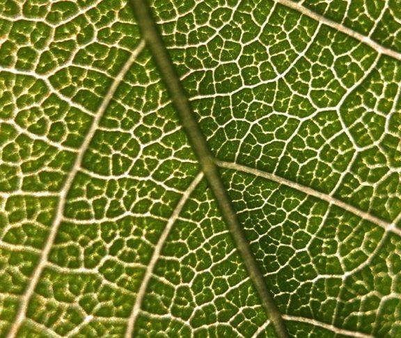 Grønt blad