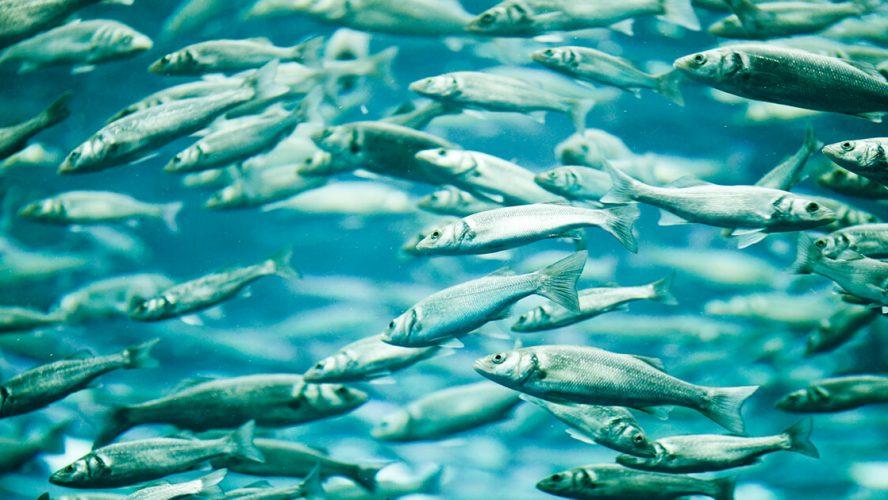 Støt bæredygtigt fiskeri – og forbliv sund