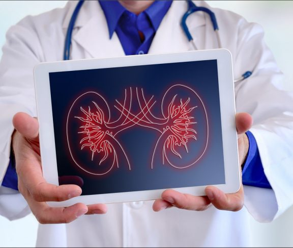 Doctor showing a kidney representation on a tablet in front