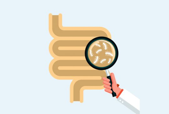 Illustration of a magnifying glass inspecting gut microbes