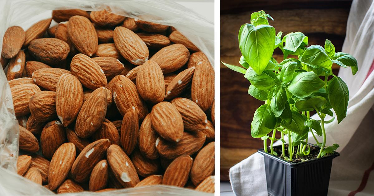 Pähkinöitä ja basilikaa ei tulisi säilyttää jääkaapissa.