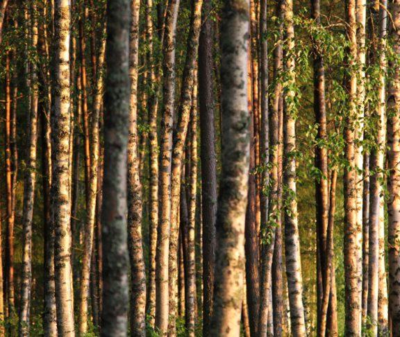 metsäteollisuus