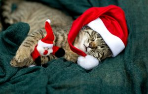 A sleeping little cat with santa hat