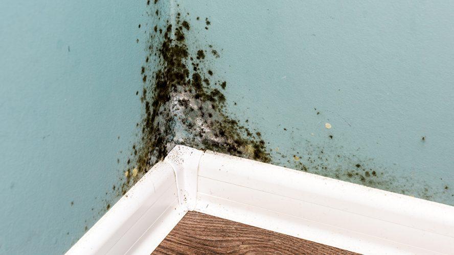 en væg med skimmelsvamp kan give allergi