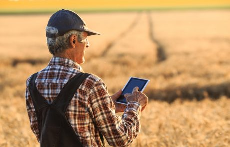 Mature farmer using digital tablet for examination of the wheat field status. Wears shirt, union suit and a hat. On background sunbeam and gold colored field. Focus on foreground.