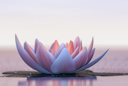 a lotus flower good for relaxation (3d rendering)