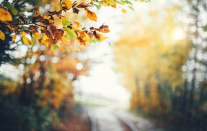 Autumn background with colorful branches and defocused path through forest.