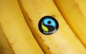 Bracknell, England - May 30, 2014: Bananas bearing the United Kingdom Fairtrade Foundation sticker. Founded in 1992 the organisation promotes global trade with marginalised workers and their communities. The sticker is licensed to products sold in the UK in accordance with internationally agreed Fairtrade standards