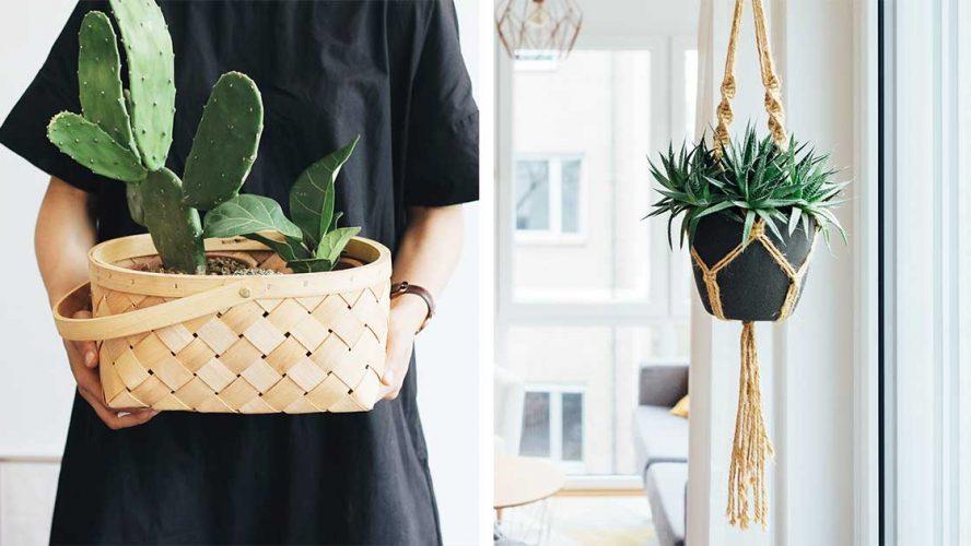 helppohoitoiset-huonekasvit