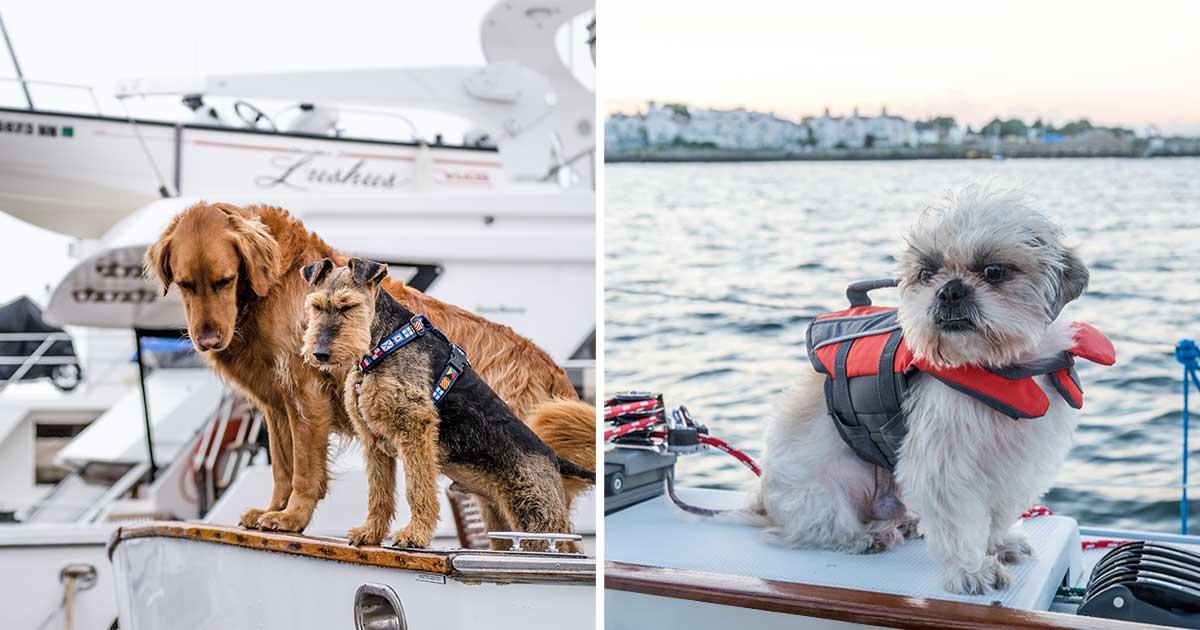 veneily-koiran-kanssa-turvallisuus