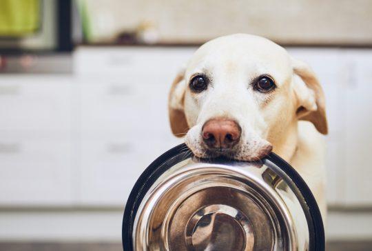koiran-raakaruokinta-raakaruoka-ravinto