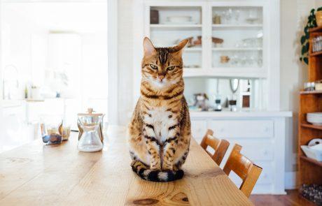 Bruin-zwart gevlekte kat zit op eettafel.