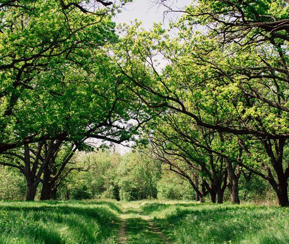 Beeld van een frisgroen bos in de lente.