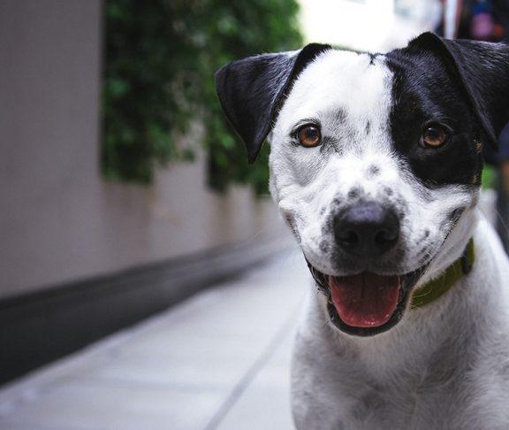 Hond kijkt recht in de camera