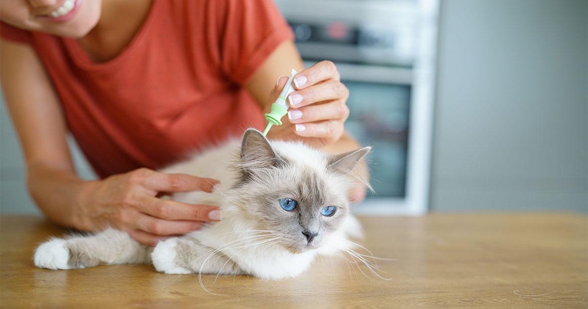 Vlooien herkennen en verwijderen bij kat