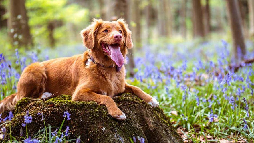 Gelukkige hond in het bos