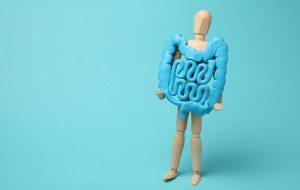 Poppetje houdt model vast van spijsverteringskanaal