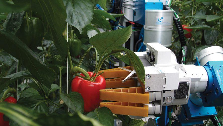 Robot plukt paprika