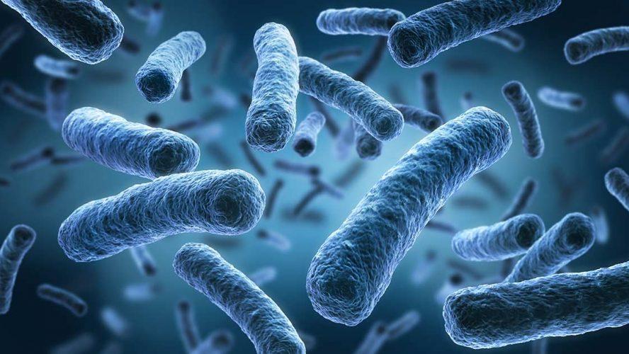 3D-afbeelding van legionellabacteriën